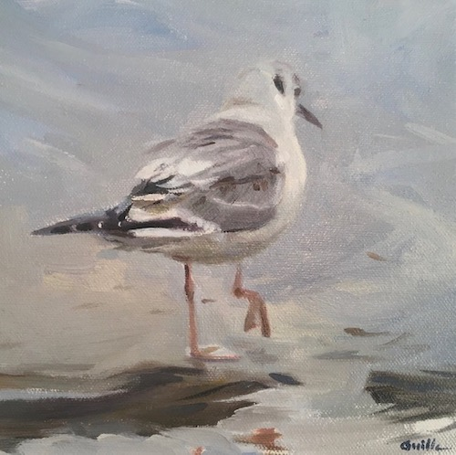 Fine art Bonapartes Gull