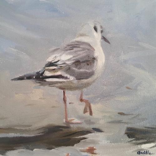 Fine art Bonapartes Gull